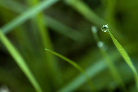 waterdrop on foliage Stock Photo - 549910