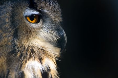 sideportrait  of an owl on a black background Stock Photo