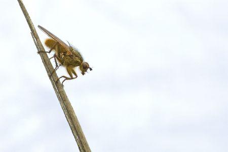 exasperation: fly isolated on white background Stock Photo