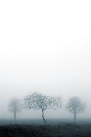 trees in fog with white for copyspace