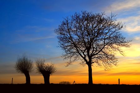 sunset with backlit trees on the horizon Stock Photo