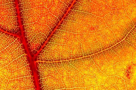 hazy close-up of a autumn leaf Stock Photo