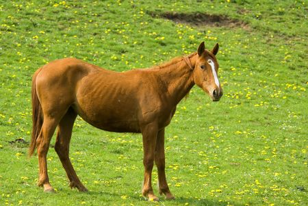 brown horse with green natural background full of yellow flowers photo