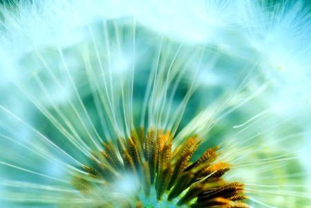 a hazy concept of a dandelion