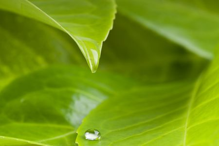 waterdrop from leaf Stock Photo