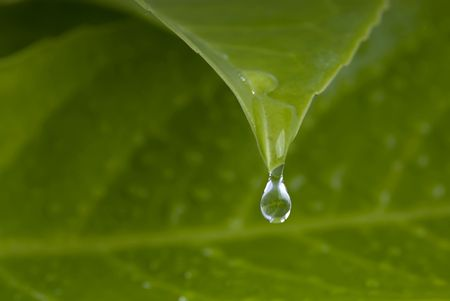 water drops from leaf, shallow depth of field photo