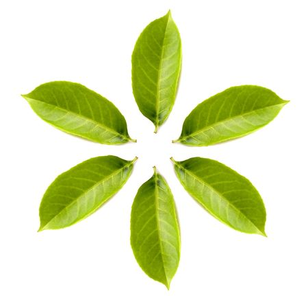 circle of green leafs isolated over white Stock Photo - 991706