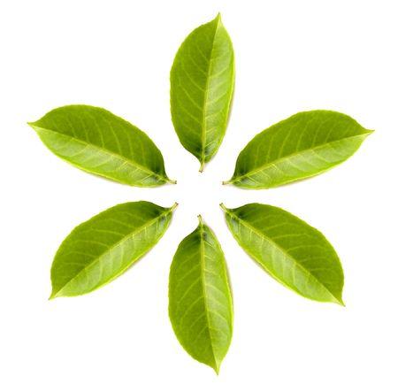 nervure: el c�rculo del verde hojea blanco aislado del excedente