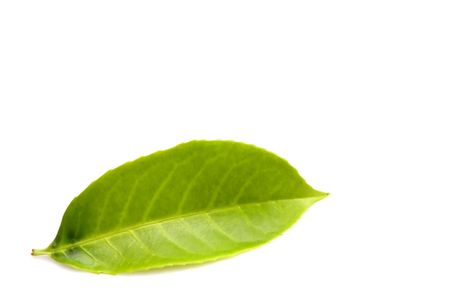green leaf isolated over white Stock Photo - 998483