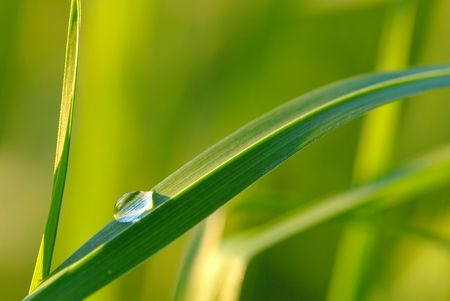 waterdrop on grass and shallow depth of field, Stock Photo - 1867871