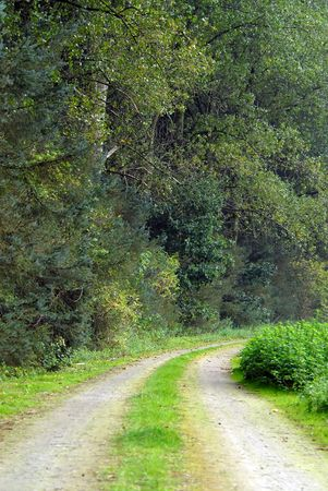 Road through lush green forest photo