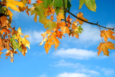 Colorful autumn leaves against a blue sky with clouds Stock Photo - 1989661