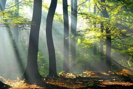 sunbeams pouring into the autumn forest creating a mystical ambiance Stock Photo