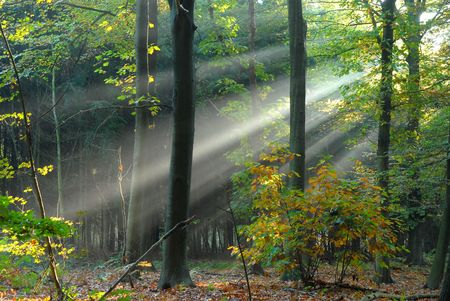 cathartic: sunbeams pouri into the autumn forest creating a mystical ambiance