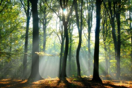 sunbeams pouring into a slightly blurred autumn forest creating a mystical ambiance Stock Photo