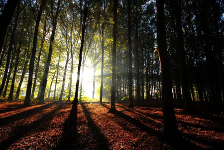 sunbeams pouring into the autumn forest creating a mystical ambiance Stock Photo - 2320530