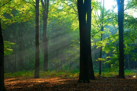 sunbeams pour into the autumn forest creating a mystical ambiance Stock Photo - 2373490