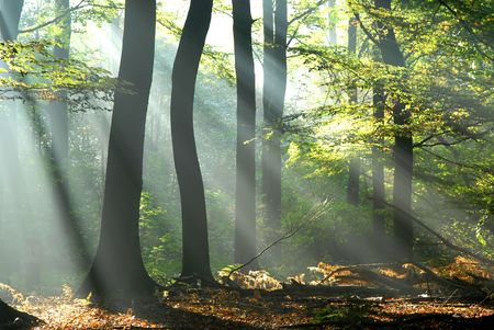 sunbeams pour into the autumn forest creating a mystical ambiance photo