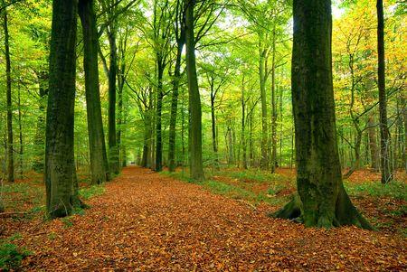 path through lush forest photo