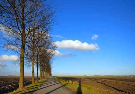 straight path: Road and Line of trees under a blue cloudy sky