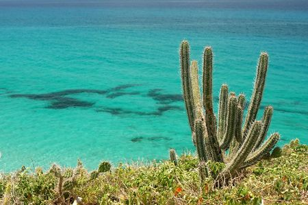 close-up of cacti with atlantic ocean in the background photo