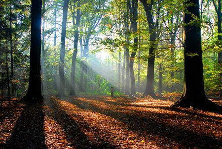 sunbeams pour into the autumn forest creating a mystical ambiance Stock Photo - 2536679