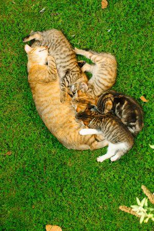 the offspring: gato con descendencia mentir en la hierba