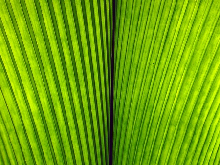 disposed: Photo of striped leaf texture background disposed by vertical