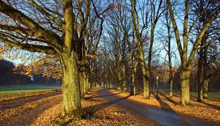 Alley in the park. Stock Photo - 3178838