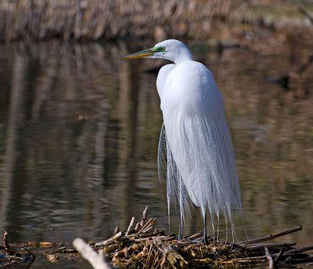 Big Bird looking for fish. Stock Photo - 3178825