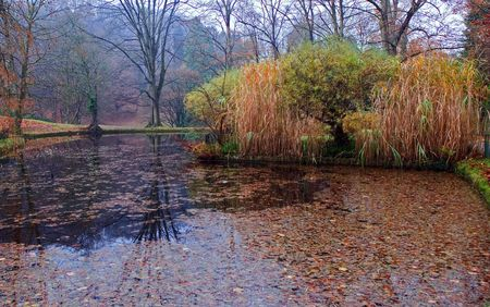 autumn pond. Falling off leaves are in water. Reflection of tree. Stock Photo - 3239612