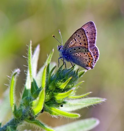 butterfly rests on the top of green plant Stock Photo