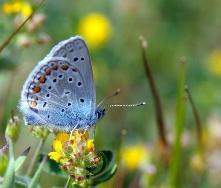 varicoloured butterfly sits on a yellow flower and collects nectar Stock Photo
