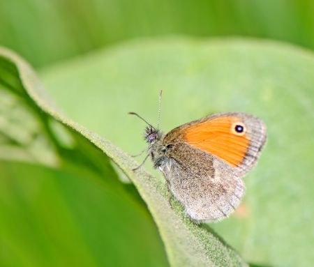 butterfly on blur background sits resting on a green sheet  Stock Photo