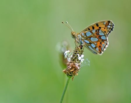 butterfly sits on a flower with green background