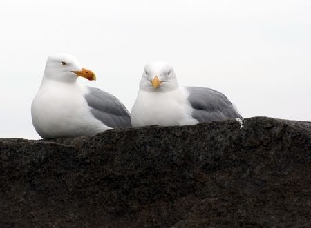 two gulls sit on a stone at ashore ocean