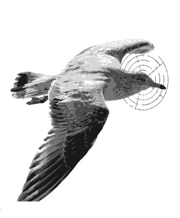 gull in a breech-sight on a white background