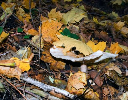 moment of autumn  in the forest. Falling off leaves on ground and mushroom