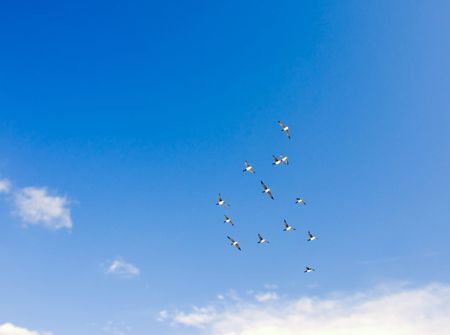 geese on blue autumn sky going to fly away in warm edges Stock Photo - 3492426