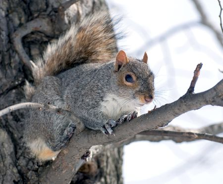 The squirrel has got on a tree and  looks therefrom with watchfulness at the photographer