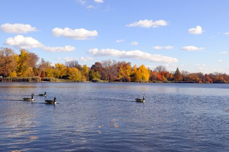 These ponds with geese, on a sunny autumn day Stock Photo - 3905237