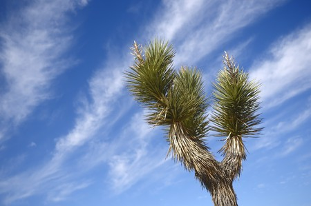 Lonely cactus against the blue sky in desert  photo