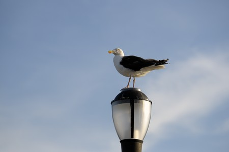 A seagull perches on a boardwalk lamp against blue sky