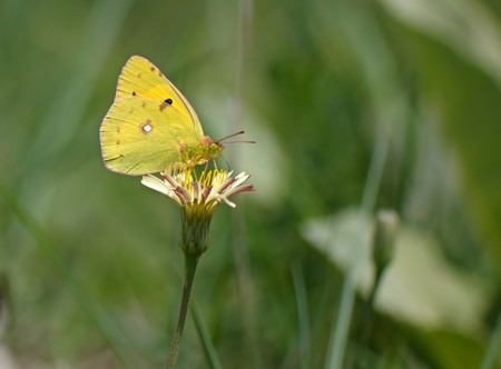 The small Beautiful butterfly feeding on a flower in summer day