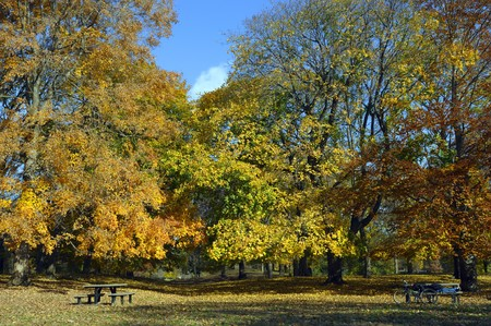 autumn colors in the park with wooden benches