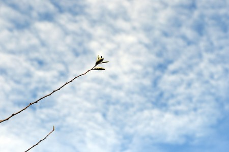 Branch with buds against the blue sky