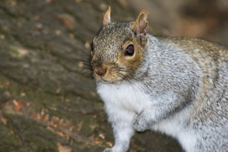 The careful squirrel in expectation of a nut Stock Photo