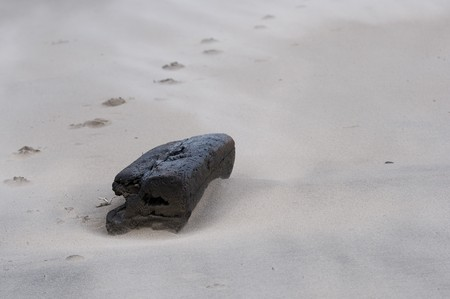 Traces conduct afar by a log lying on sand