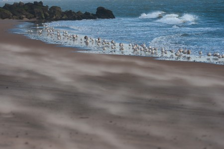 A picture from the beach of seagulls standing by the water.