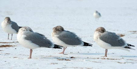 Picture of a birds in winter outside neare the ocean